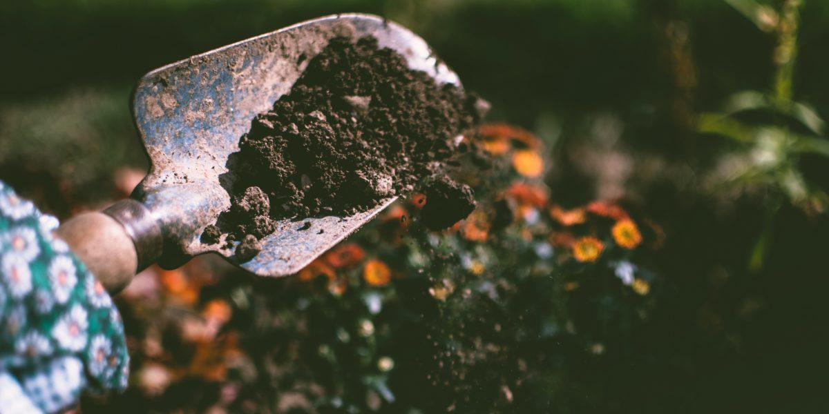 Découvrez notre sélection d'ouvrages pour les jardiniers novices ou expérimentés.