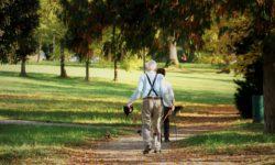 Parmi les altérations naturelles observées chez les êtres vieillissants, la perte de capacité musculaire est l'une des premières responsables de la perte d'autonomie.