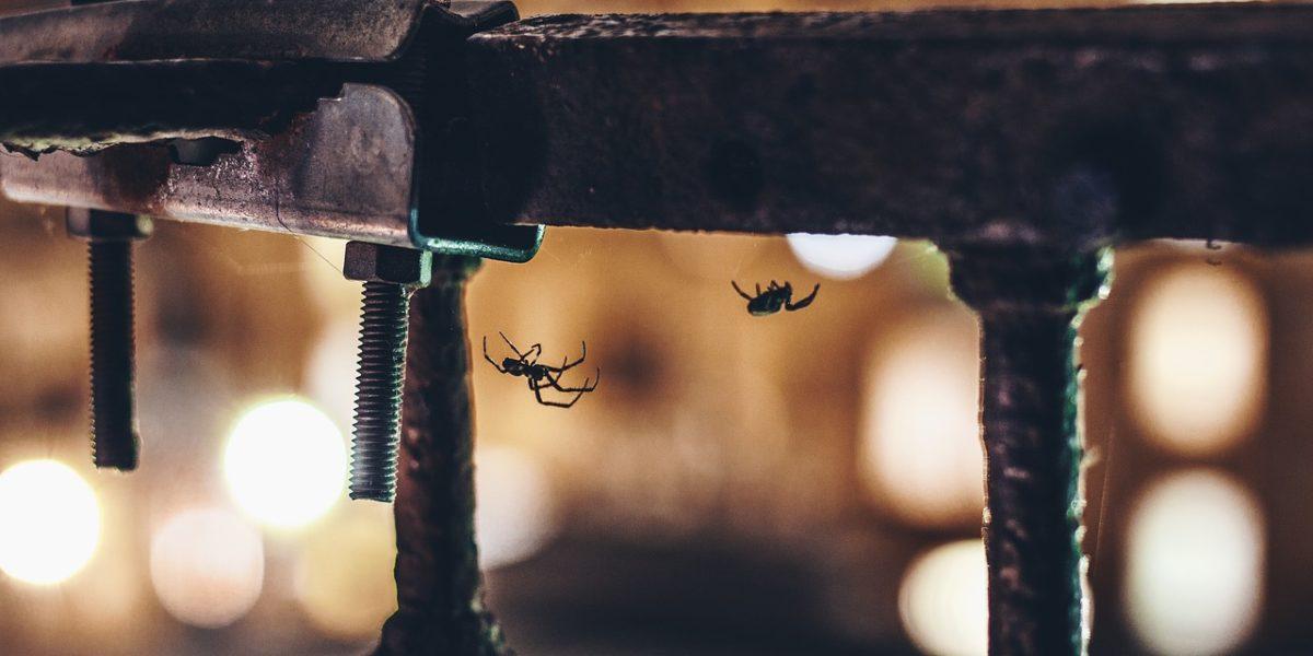 L'arachnophobie fait partie des peurs les plus répandues dans le monde.